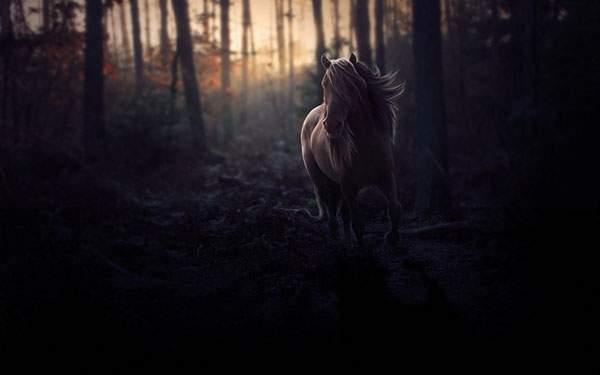 林の中を走る馬を暗いトーンで撮影したかっこいい写真