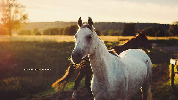 夕日と二匹の馬の写真壁紙画像