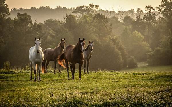 夕暮れ時の草原に佇む四匹の馬たち