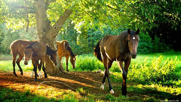 木々と馬たちを撮影した爽やかできれいな写真壁紙