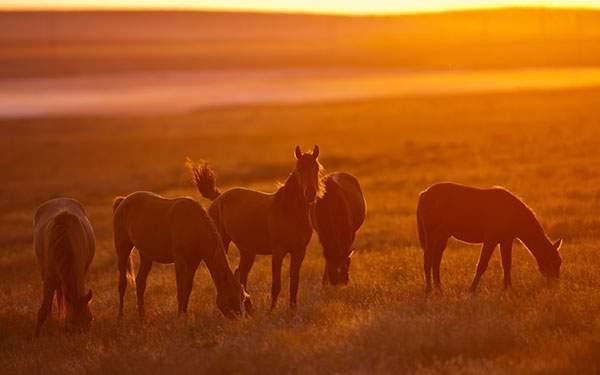 夕日で真っ赤に染まった草原と馬達の高画質な壁紙画像