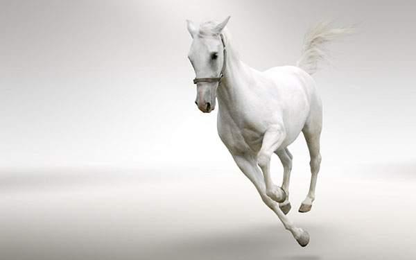 勢いよく駆け抜ける白馬のかっこいい壁紙画像