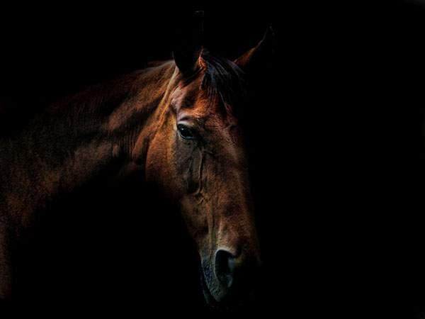 黒バックに浮かび上がる馬のシブい雰囲気の壁紙画像