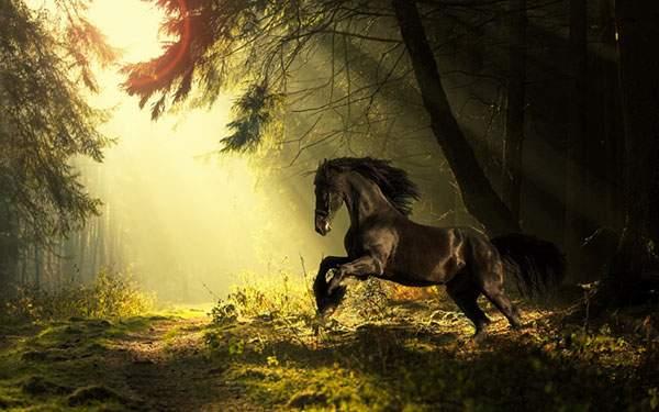 森に差し込む光と馬を撮影したかっこいい写真