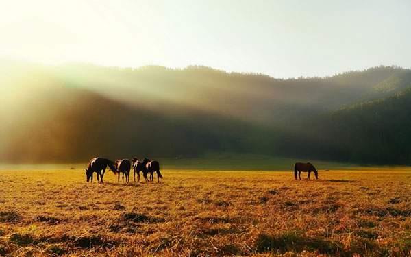 爽やかな草原と草を食べる馬達