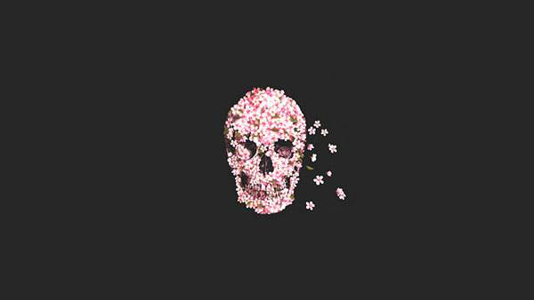 髑髏と桜の花が綺麗なイラスト壁紙画像