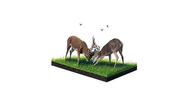 角を合わせて決闘をする鹿のイラスト壁紙