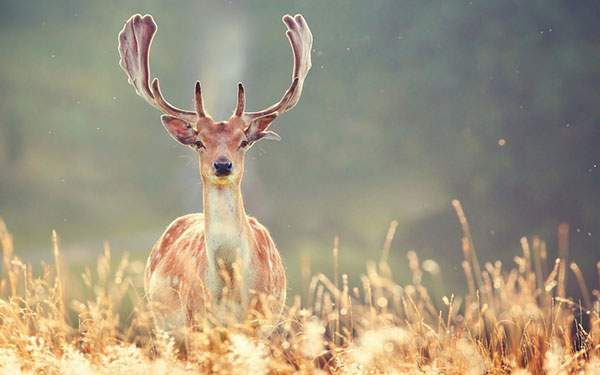 大きくて立派な角を持つ鹿を撮影した綺麗な写真画像