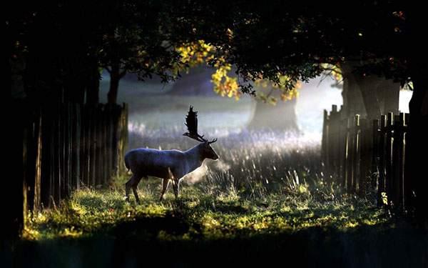 差し込んだ光が作るクッキリした陰影が美しい鹿の写真壁紙
