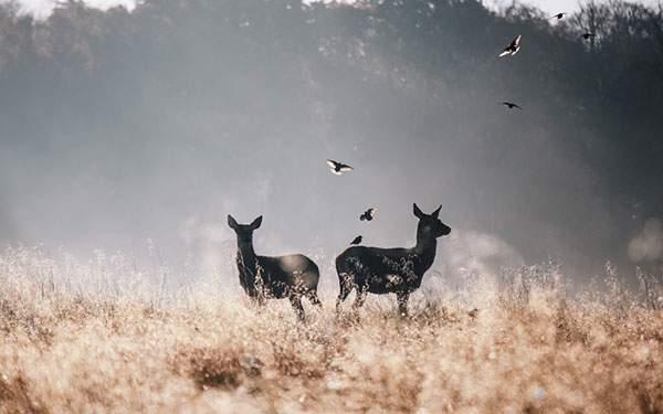 枯れた草原に佇む鹿と鳥のシルエットが美しいおしゃれな壁紙