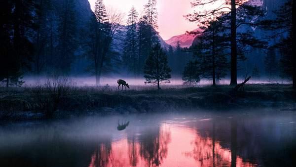 湖のほとりの一匹の鹿を撮影したムード満点の写真壁紙
