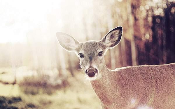 レトロ調の色合いで鹿を撮影した可愛い写真壁紙画像