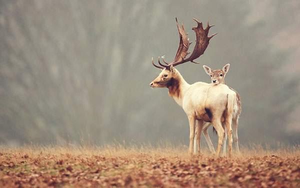 とても大きくて木みたいな角がかっこいい鹿
