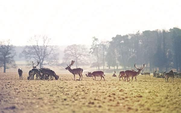 草原で草を食べる鹿の群れの美しい写真壁紙画像