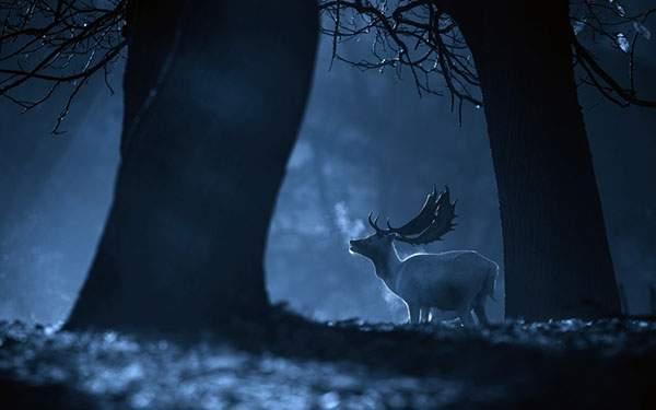 夜の森で白い息を吐く一匹の鹿を撮影した写真壁紙画像