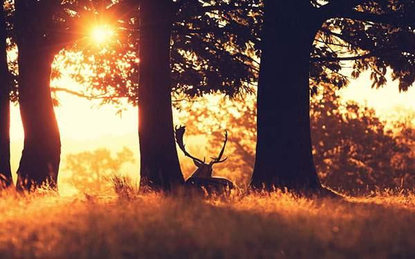 夕日の草原の木陰で休む鹿の美しい写真画像