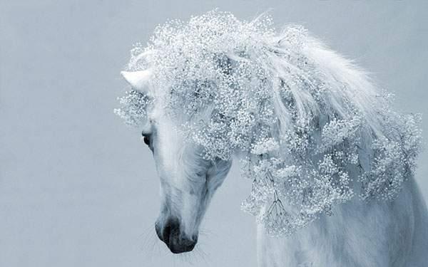 たてがみが細かい花になっている白馬の美しい壁紙画像