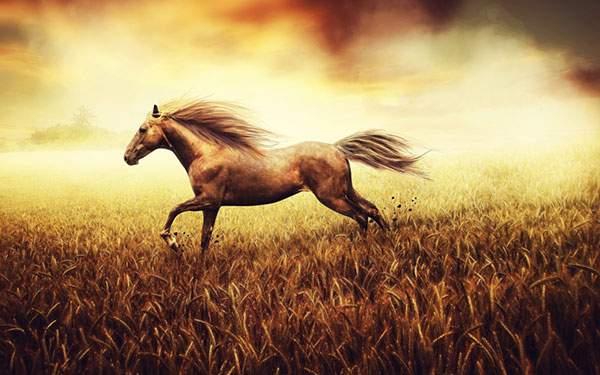 草原を駆け抜ける馬を描いたレトロな雰囲気のイラスト壁紙画像