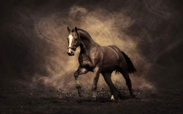 土を巻き上げて走る馬のクールな壁紙画像