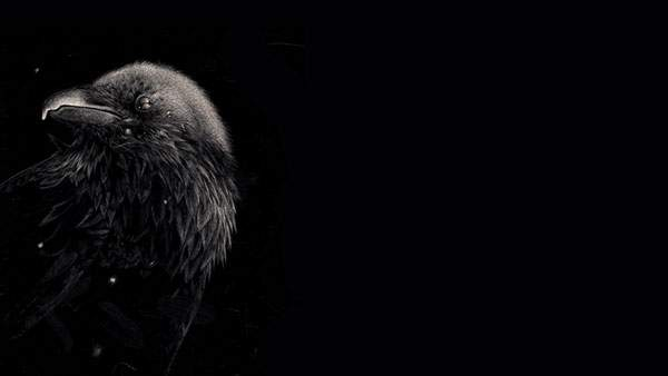 羽の一枚一枚まで精密に描かれた黒背景なシンプルなイラスト壁紙