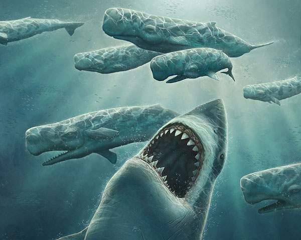 サメとたくさんの鯨達のリアルなイラスト