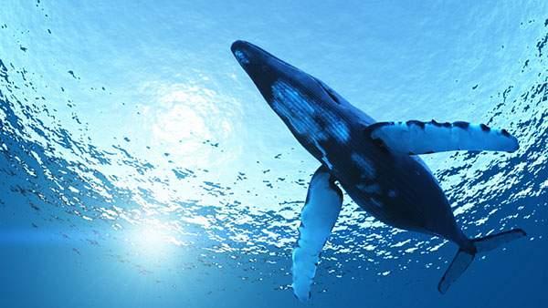 水平ジャンプするクジラ
