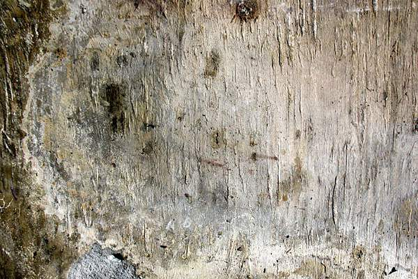 古びて朽ちかけた木の高解像度テクスチャー - 06