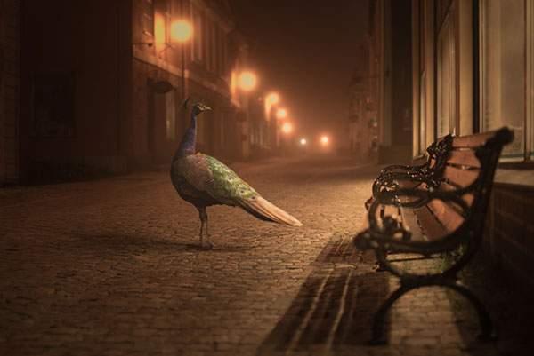 霞がかった夜の街を歩く動物達を撮影した美しい写真シリーズ - 01