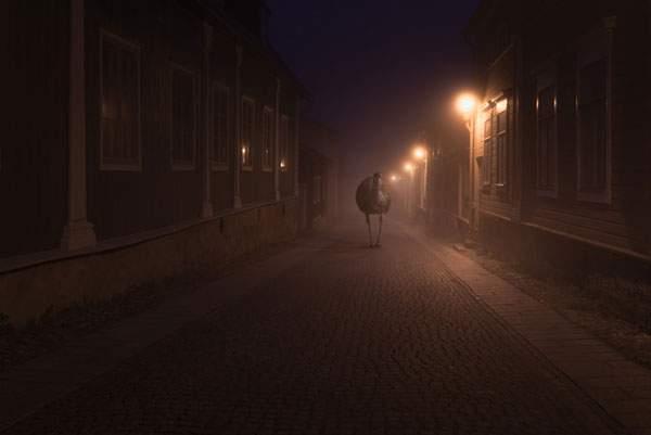 霞がかった夜の街を歩く動物達を撮影した美しい写真シリーズ - 04