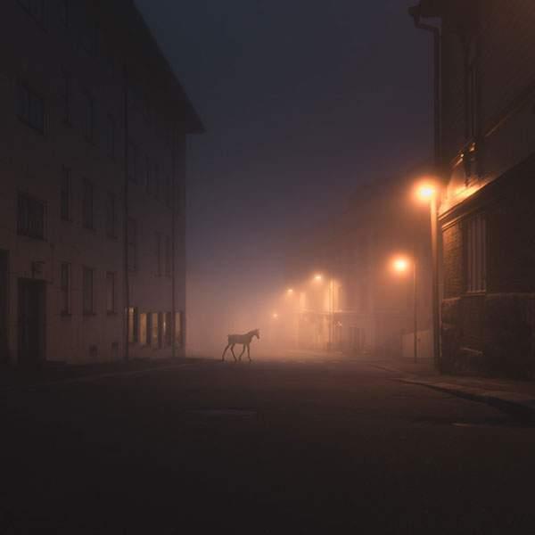 霞がかった夜の街を歩く動物達を撮影した美しい写真シリーズ - 05