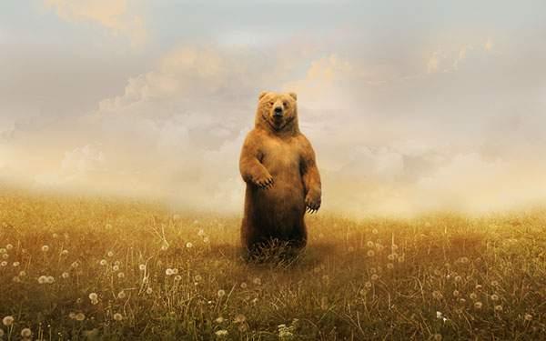 二本足で立ち上がった熊を描いた綺麗なイラスト壁紙画像
