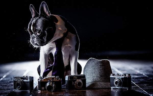 カメラや帽子と一緒にネクタイをしたフレンチブルドッグを撮影したおしゃれな壁紙