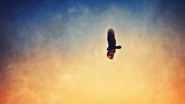 カラフルな空と鷲のシルエットを撮影した綺麗な写真壁紙