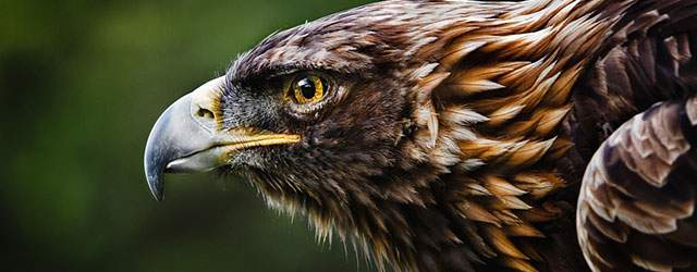 無料壁紙:かっこいい鷲の高画質画像まとめ(1920×1080以上)