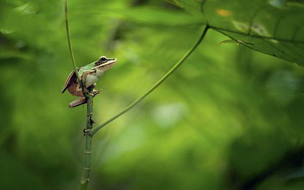 茎に捕まるカエルの綺麗なボケで撮影した写真壁紙画像
