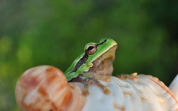 カエルの顔をアップで撮影した浅い被写界深度のボケが美しい写真壁紙画像