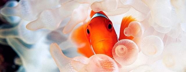 「熱帯魚 海」の画像検索結果