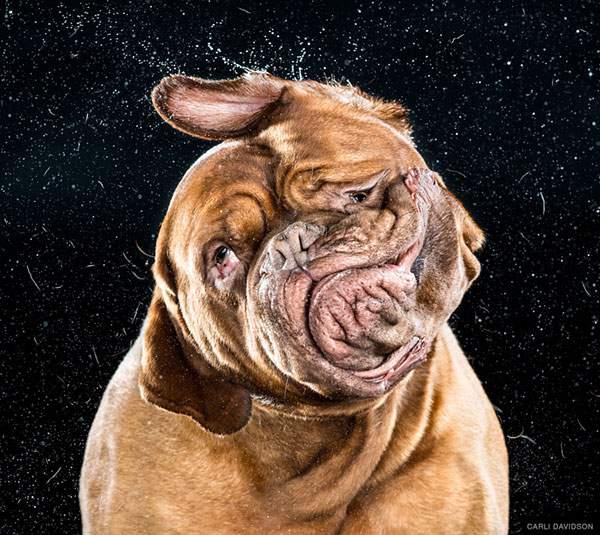 犬がブルブルする瞬間を撮影した写真作品 - 02
