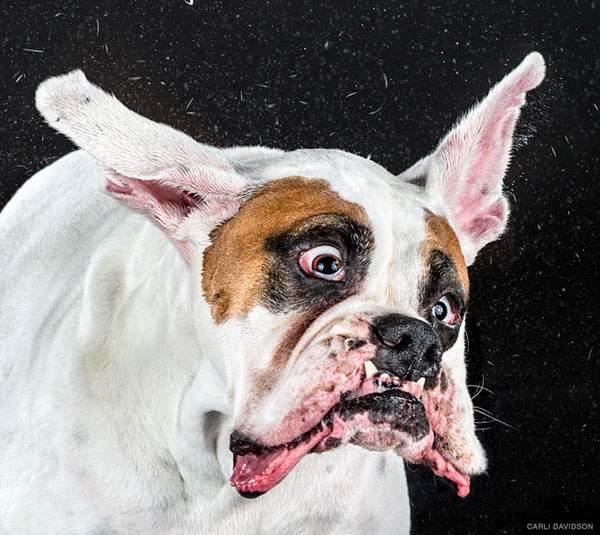 犬がブルブルする瞬間を撮影した写真作品 - 04