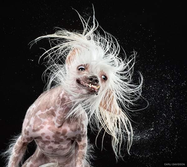 犬がブルブルする瞬間を撮影した写真作品 - 05