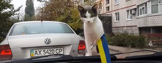 「にゃんだコレは?」ワイパーにビビりながらも興味津々な猫が可愛い過ぎるw