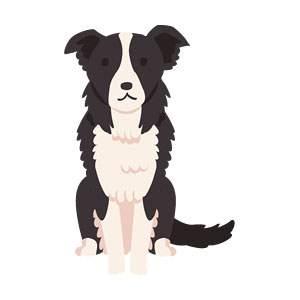 犬(ボーダー・コリー)