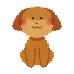 トイプードルのイラスト(犬)