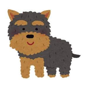 ヨークシャー・テリアのイラスト(犬)
