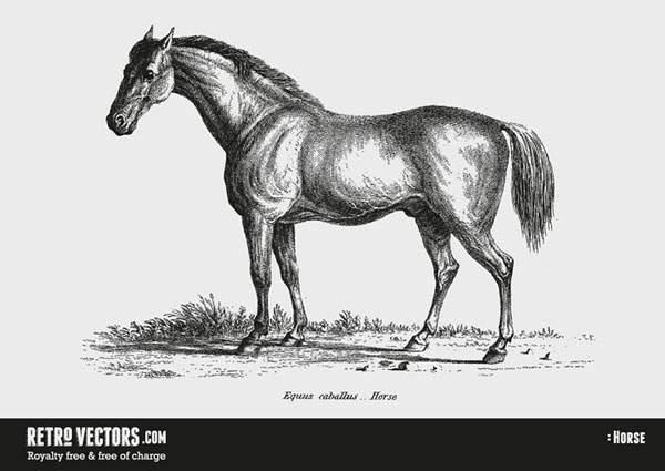 Horse No.2