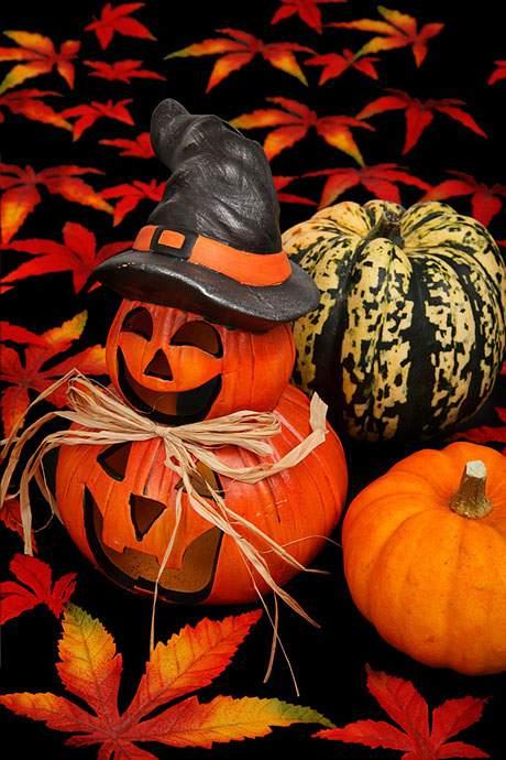 黒とオレンジのコントラストが綺麗なハロウィンのフリー写真素材