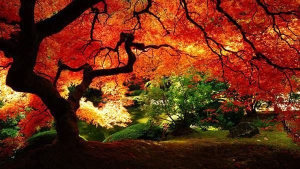 庭園の紅葉を撮影した綺麗な写真壁紙画像