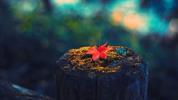 木の柵の上に落ちた一枚のモミジの葉の綺麗な写真壁紙画像