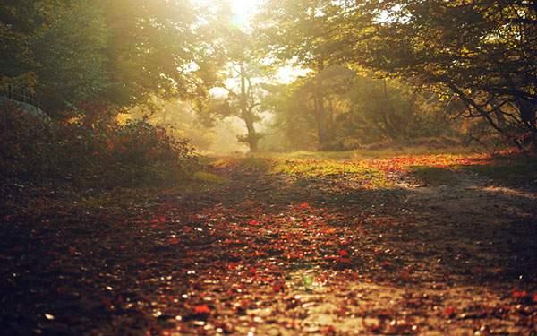地面に落ちた赤い紅葉と木漏れ日を撮影した美しい写真壁紙画像