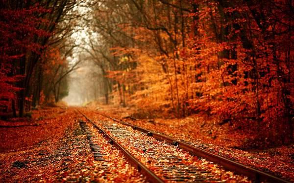 紅葉した線路道を撮影した写真壁紙画像